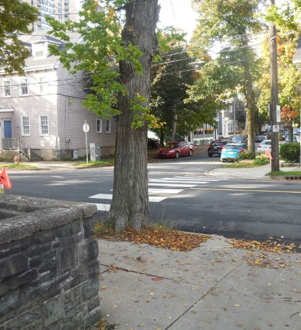Schmidtville Tree Brouhaha: Official At Halifax City Hall: 'No HRM Aptitude To Take Down Trees – Only One Of Many Staff Options'