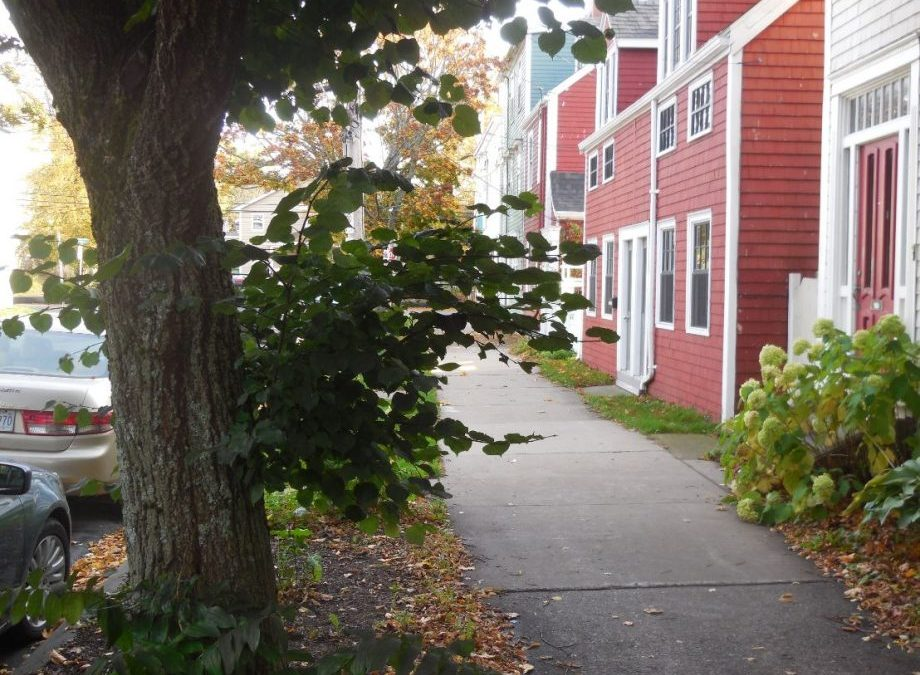Schmidtville Proposed Tree Massacre:  This Is Not Fake News – United Nations In 2019 Called 'Halifax – Tree City Of The World'