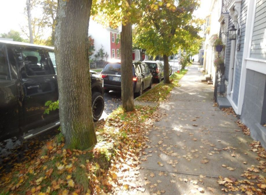 As Schmidtville Cries: Waye Mason Refuses To Answer The Question On Whether He Will Nix HRM Proposal To Chainsaw – Massacre – Majestic  Century-Old Trees In Schmidtville – Adopts 'Ostrich Mode'